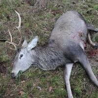 Last stag of the season